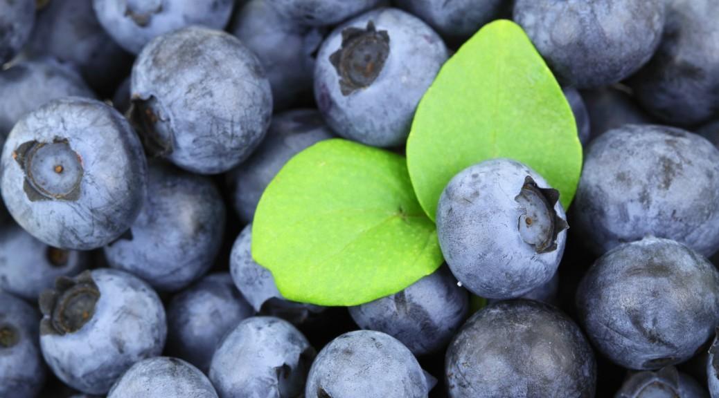 Sunde frugter